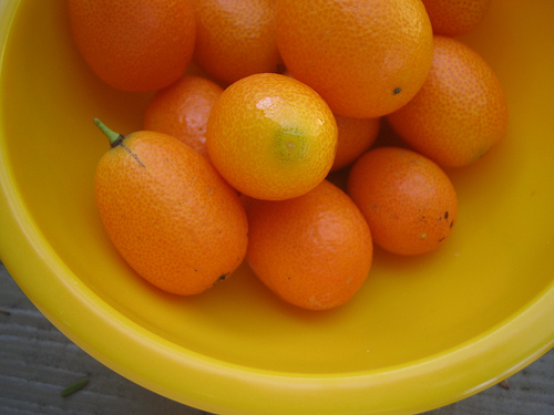 kumquats small flickr
