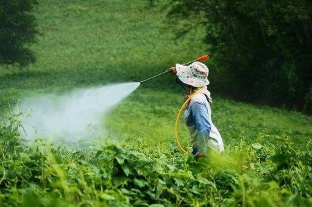 pesticides-123-Amor.jpg